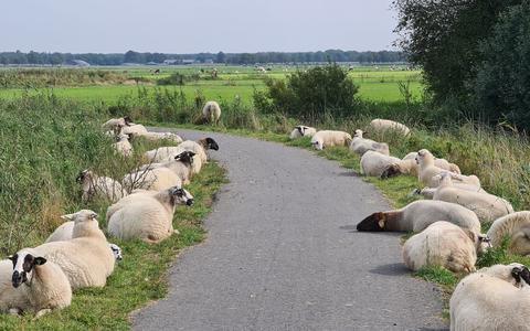 De fietsers kunnen door een soort erehaag gewoon doorrijden.